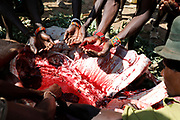 Men drink blood from the inside of a slaughtered camel that has been speared to death during a traditional initiation ceremony into adulthood of men aged between 18 and 20 in a Pokot community of herdsmen in Baringo County, Kenya, October 2, 2018.