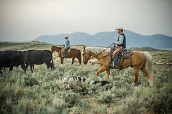 "Stephen Becklund and Bryan Ulring herd cattle at the J Bar L ranch, a unique, conservation-friendly ranch nestled into the wide open land of the Centennial Valley in southern Montana. The ranch finishes their cattle on grass, in contrast to the vast majority of ranches in the U.S. that send cattle to feedlots. The 2,000 head at J Bar L ""never go into a feedlot,"" said Bryan Ulring, manager of the ranch. He added that J Bar L is one of the biggest grass finishers in the state. The Centennial Valley is an important wildlife corridor for elk, moose, antelope, deer, wolverines, grizzly bears, wolves and hundreds of bird species. The valley is largely owned by a handful of large ranches, which means their use of the land impacts the local environment. © Ami Vitale"