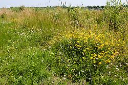 Banisveld, Boxtel, Noord Brabant