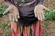 Rwanda<br /> Une paysanne de 73 ans dans son champs. Mulindi, province de Byumba.