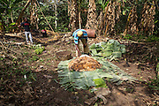 Freddy Akuffo ferments a patch of Cocoa beans...Freddy Akuffo has been a cocoa farmer since 1969 when he inherited his farm from his father. Since he received his training, as part of the Kraft Cocoa Partnership, Freddy has seen his yield increase from 180 bags of cocoa a year to 220.