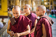 07 JUNE 2014 - YANGON, YANGON REGION, MYANMAR:  Monks at Shwedagon Pagoda in Yangon (Rangoon), Myanmar (Burma). Shwedagon Pagoda is officially called Shwedagon Zedi Daw and is also known as the Great Dagon Pagoda and the Golden Pagoda. It's a 99 metres (325 ft) gilded pagoda and stupa located in Yangon. It is the most sacred Buddhist pagoda in Myanmar with relics of the past four Buddhas enshrined within: the staff of Kakusandha, the water filter of Koṇāgamana, a piece of the robe of Kassapa and eight strands of hair from Gautama, the historical Buddha.  PHOTO BY JACK KURTZ