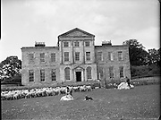 Sheepshearing at Charleville House, Enniskerry, Co. Wicklow..09.06.1961