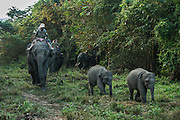Asian elephant (Elephas maximus) & tourists<br /> Kaziranga National Park<br /> Assam<br /> North East India<br /> UNESCO World Heritage Site<br /> ENDANGERED