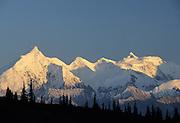 Alaska Range, Forest, Denali National Park, Mount McKinley, Alaska