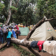 Porters at Big Tree Camp (formally known as Forest Camp) on the first night of a climb up Mount Kilimanjaro along the Lemosho Route.