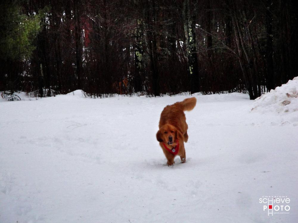 Oscar runs in the snow.