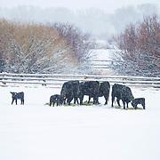 Wintry Day, 6X Ranch, Mackay, Idaho