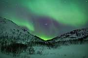 The Aurora Borealis, the spectacular Northern Lights turn the sky green and purple above Kvaloya island at Tromso in the Arctic Circle in Northern Norway