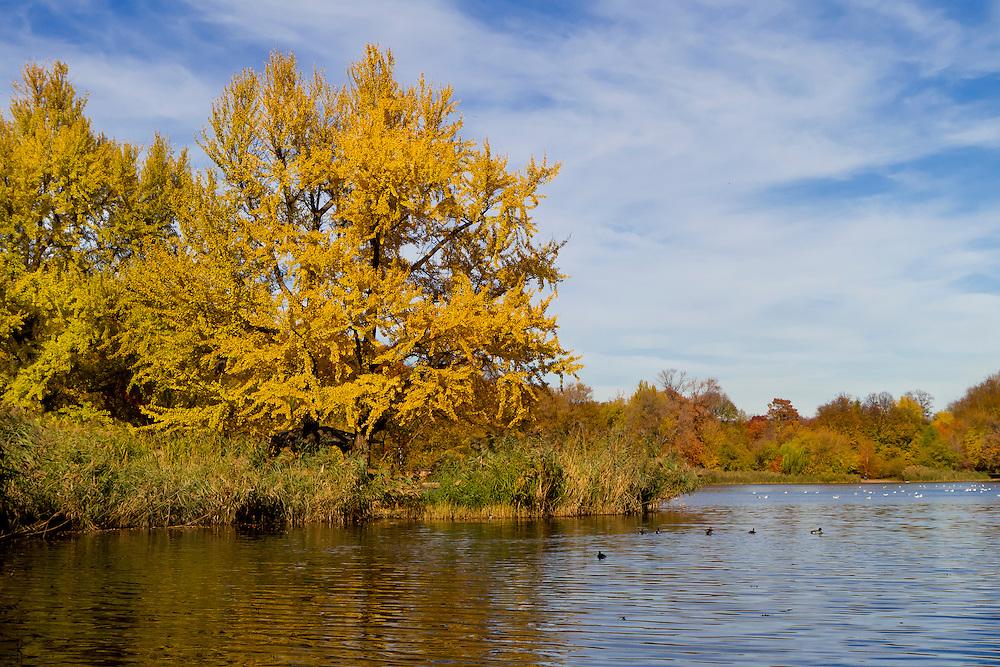 Fall colors at Prospect Park lake. 2010.