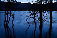 Twisted trunks of trees are reflecting in Lake Vernon are silhouetted against the pre-dawn light, Yosemite National Park