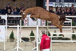 001, Quaresma VTS<br /> Hengstenkeuring BWP - Lier 2019<br /> © Hippo Foto - Dirk Caremans<br /> 18/01/2019