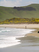 Tourist's play in the waves and water of Allan's Beach, near Portobello, on the Otago Peninsula, near Dunedin, New Zealand