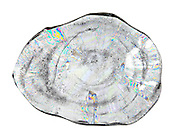A cross section of an icicle that is three days old. In this case the icicle grows rings similar to a tree. The age of an icicle can be determined by the number of heating and cooling cycles the icicle has gone through. This cross section is 2 mm thick and is photographed in polarized light.
