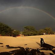 A male sea lion rested on Playa Mann as a rainbow formed overhead on San Cristobal island on Galapagos on 7/7/09.