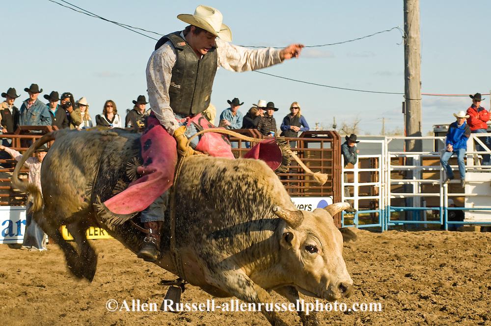 Bull Rider, Miles City Bucking Horse Sale, Montana