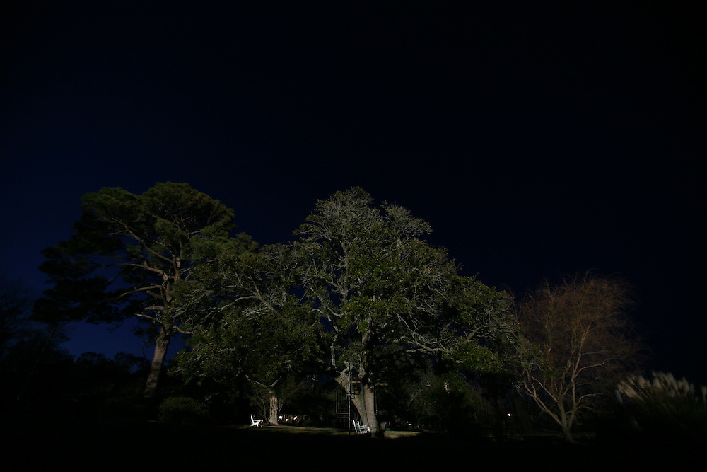Trees, pompous grass and a yard are lit up by hot lights lights in the evening.