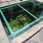 MEXICO CITY, MEXICO -- In the front coutyard of the Metrolitan Cathedral, a glass portal shows the historic exposed foundations below. Built in stages from 1573 to 1813, the Mexico City Metropolitan Cathedral is the largest Roman Catholic cathedral in the Americas. It sits in the heart of the historic quarter of Mexico City along one side of the the Zocalo.