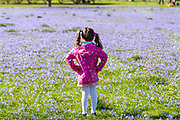 UNITED KINGDOM, London: 05 April 2018 Zoë Morse, aged 5, takes in the colours of 'glory of the snow' flowers at Kew Gardens this afternoon. After a miserable week of rain, the sun is set to shine throughout the day. Rick Findler / Story Picture Agency