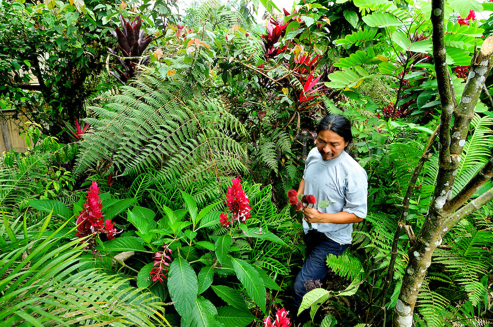 Nelson Mamallacta with a berry of Achiote, natural dye widespread in all amazonic basin