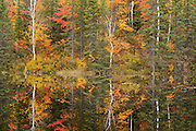 Autumn colors of forest reflected in Vermilion River<br /> Capreol<br /> Ontario<br /> Canada