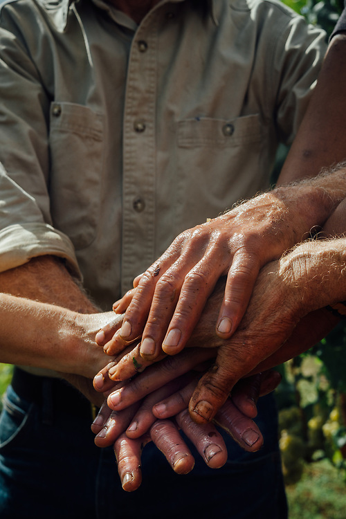 Working Hands at Cameron Winery