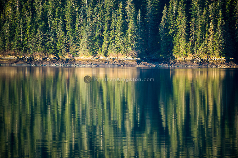 Trees reflect in a glassy sea in the Endicott Arm, Alaska.