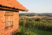 Wingerthäuschen, Weinberge Groß-Umstadt, Odenwald, Naturpark Bergstraße-Odenwald, Hessen, Deutschland   cottage in vine yards Groß-Umstadt, Gross-Umstadt, Odenwald, Hesse, Germany
