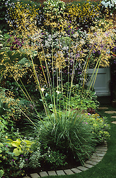 Architectural planting of Stipa gigantea in a small town garden. Giant feather grass, Golden oats