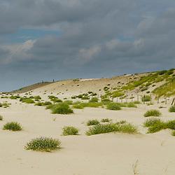 Voornes duin, Zuid Holland, Netherlands