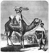 Gatling rapid fire gun (1861-62): Camel-mounted model. From 'The Science Record' New York, 1862. Engraving