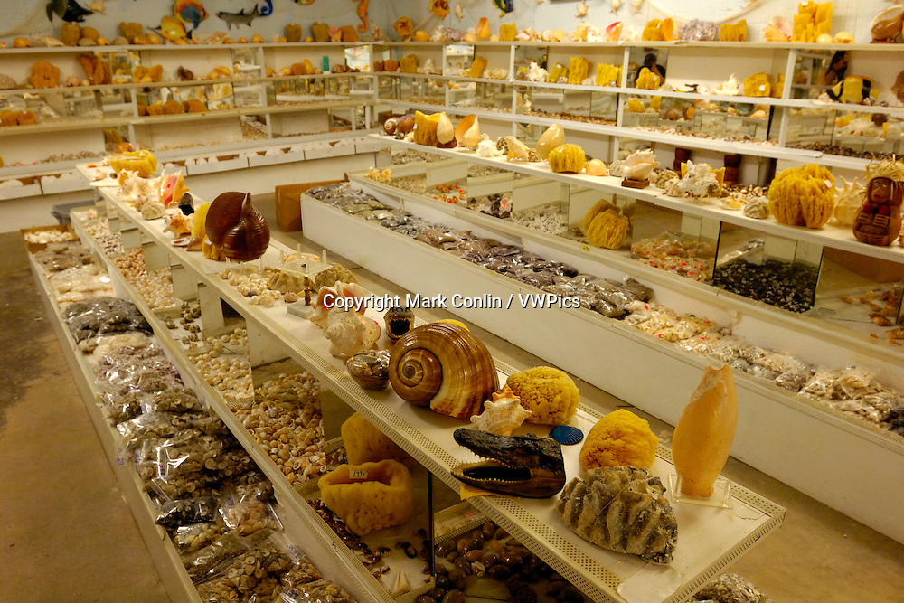 Sea shells for sale in a curio shop, Florida