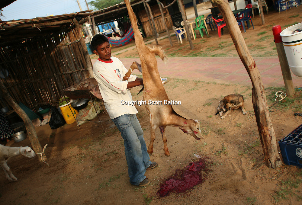 A Wayuu Indian man prepares a goat for a meal at the annual Wayuu Cultural Festival in Uribia, Colombia June 10, 2007. (Photo/Scott Dalton)