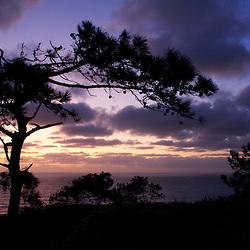 Torrey Pines State Natural Reserve, CA