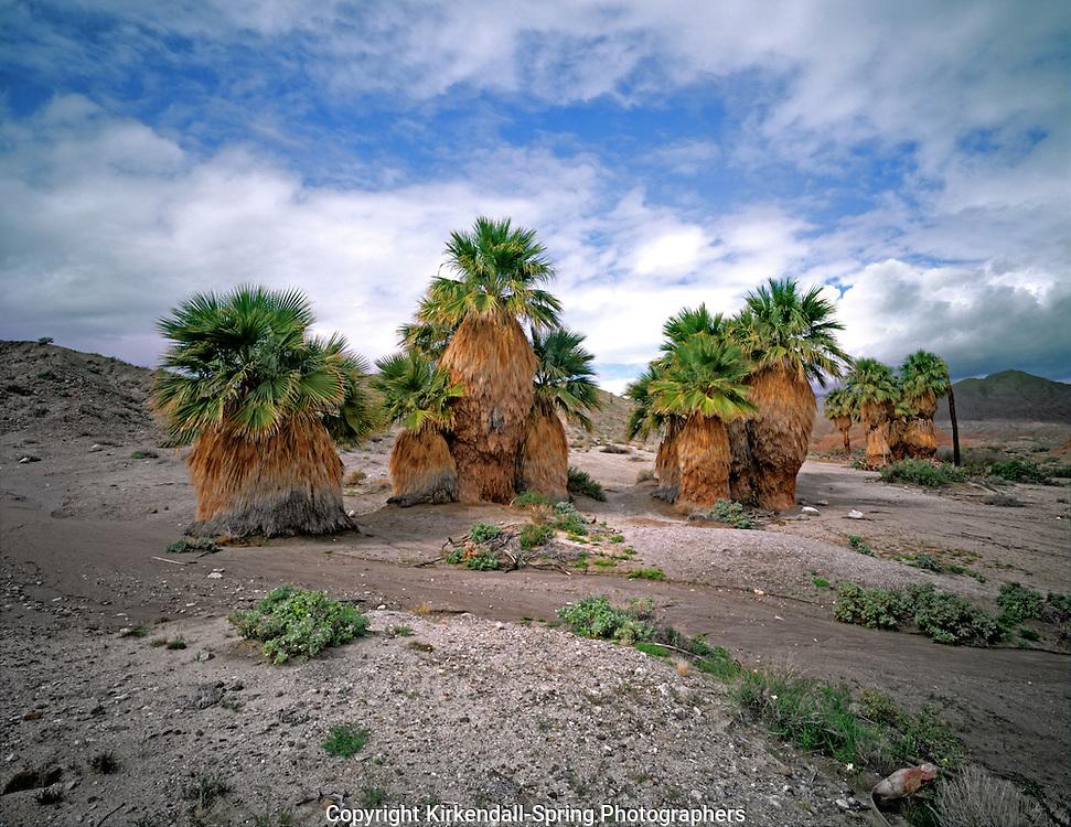 AA04866-03...CALIFORNIA - 17 Palms Oasis in Anza Borrego Desert State Park