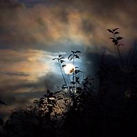 Full Moon Night / lg025