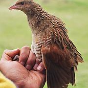 Bird Ringing UK