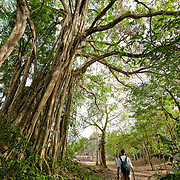 A man walking through the  Lamanai Arachaeological Park in Orange Walk, Belize