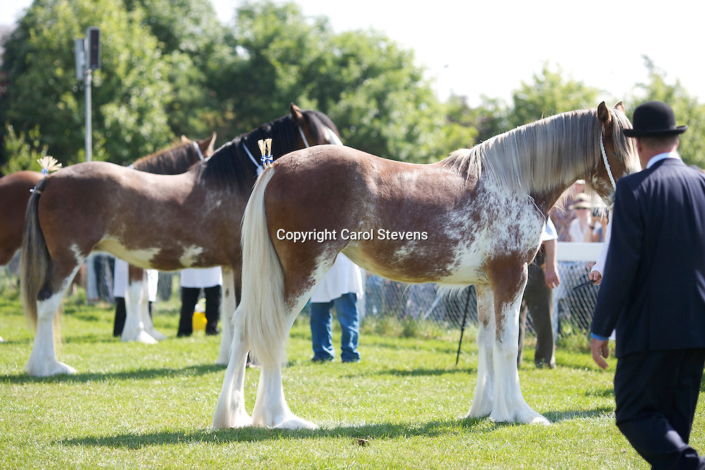 Charlotte Young and her Roan Filly Yearling  Downhill Heather  <br /> s Carnaff Ambassador<br /> Reserve Clydesdale Champion