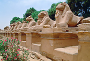 Avenue of the Rams at Karnak Temple in Luxor, Egypt