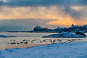 A winter sky and dusting of snow makes the magic of year round scenes at Newport's Goosberry Beach