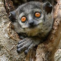 MG, Madagascar_S_SE