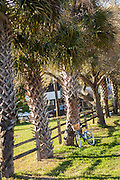 Bicycle leaning against palm trees along the beachfront on Sullivan's Island, South Carolina.