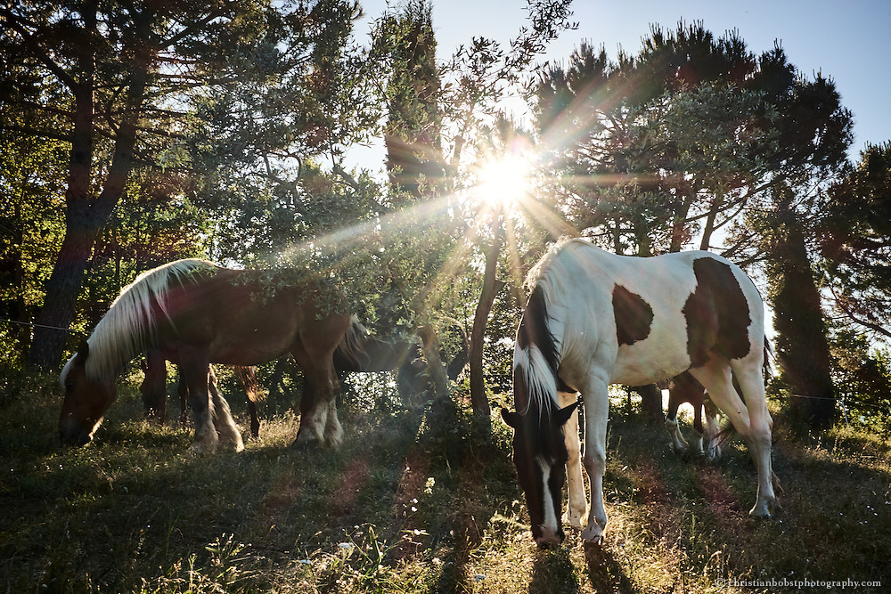 "Victor's horses are out to graze the fields that belong to the ""Casa al Sole"" in the Tuscan hills of the Maremma Alta."
