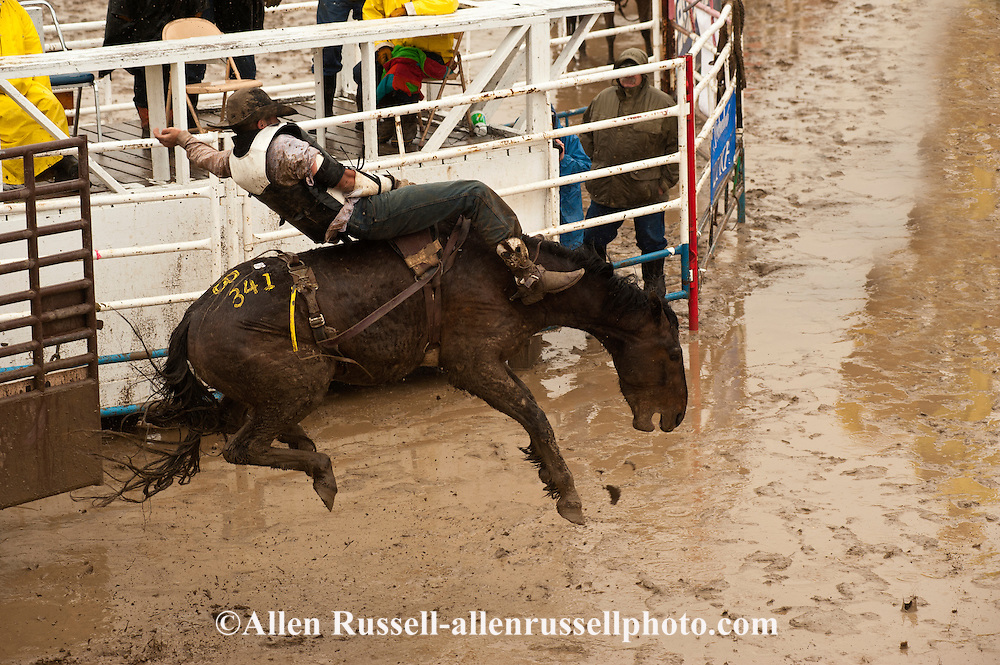 Bareback rider Spencer Brown, Miles City Bucking Horse Sale, Montana, MODEL RELEASED