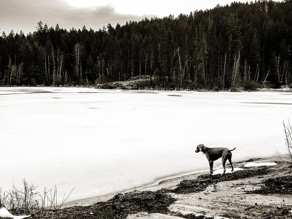 Sugar on the shore of Estes Lake