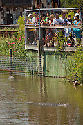 Tourists watch American alligators (Alligator mississipiensis) at Alligator Adventure in Myrtle Beach, SC.