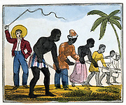 Clearing Away the Weeds. 'Then we in gangs, like beasts in droves,/Swift to the cane fields driven are;/There first our toil the weeds remove,/And next we holes for plants prepare.'   From Ameilia Opie 'The Black Man's Lament; or How to Make Sugar', London, 1826.