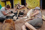 Volunteers spend time with some rescued dogs at the Soy Callejerito shelter in Cuzco, Peru.