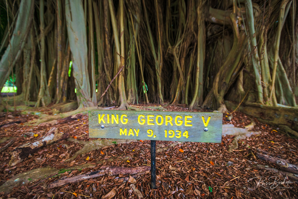 Celebrity planted banyan tree(King George V) on Banyan Drive, Hilo, The Big Island, Hawaii USA